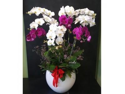 Sức mạnh ngôn ngữ kỳ diệu của hoa