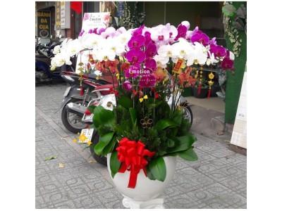 Truy tìm địa chỉ bán hoa lan hồ điệp TPHCM uy tín nhất